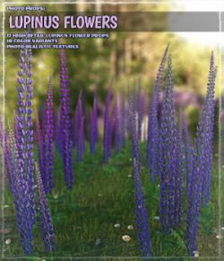 Photo Plants: Lupinus Flowers