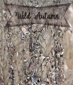 Wild Autumn: A Merchant Resource