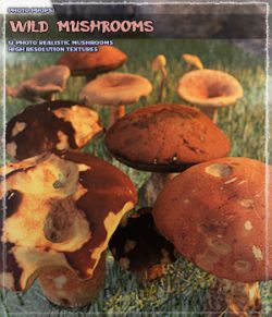 Photo Props: Wild Mushrooms