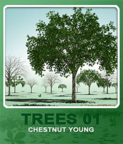 Trees01 chestnut young