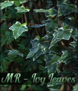 Merchant Resource Ivy Leaves
