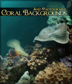 Coral Backgrounds and Photos