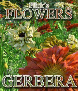 Flinks Flowers - Flower 2 - Gerbera