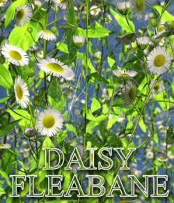 Flinks Flowers - Flower 3 - Daisy Fleabane
