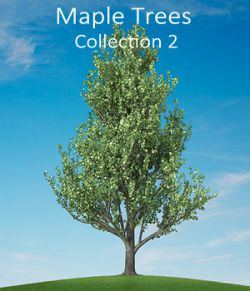 Maple trees collection 2