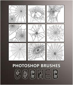 PB- Cobweb