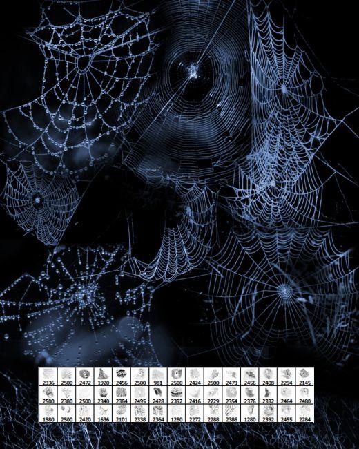 FS Spiderwebs II