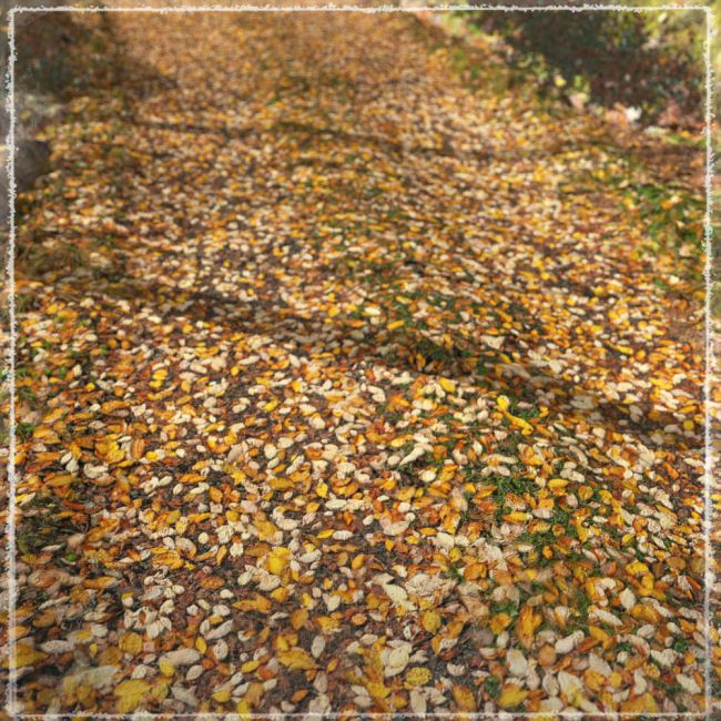3D Scenery: Autumn Road