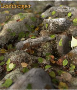 Photo Plants: Leafdropper