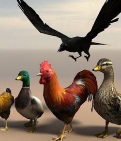 Birds - Extended License