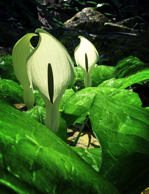 Wild Arums - A wild flower bundle for Daz Studio