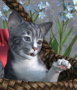 HiveWire Kitten