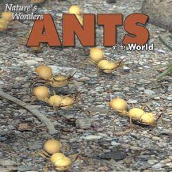 Nature's Wonders Ants