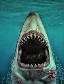 Sharks by AM: Great White