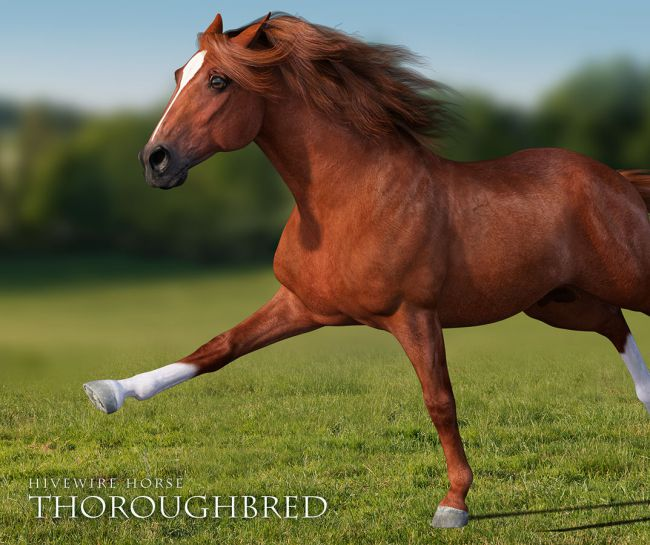 HiveWire Thoroughbred