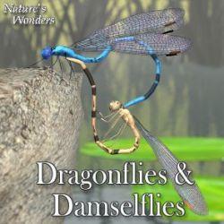 Nature's Wonders Dragonflies & Damselflies