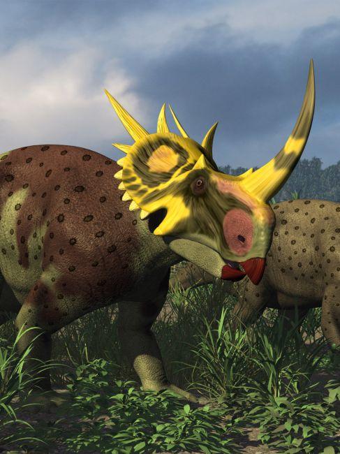 Rubeosaurus DR