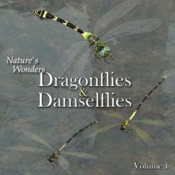 Nature's Wonders Dragonflies & Damselflies of the World Vol. 1