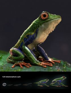 Amazon Tree Frogs and Tadpole