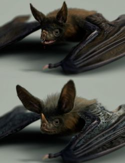 Vampire Bat by AM
