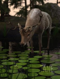 Tane The Old Deer for Daz Horse 2