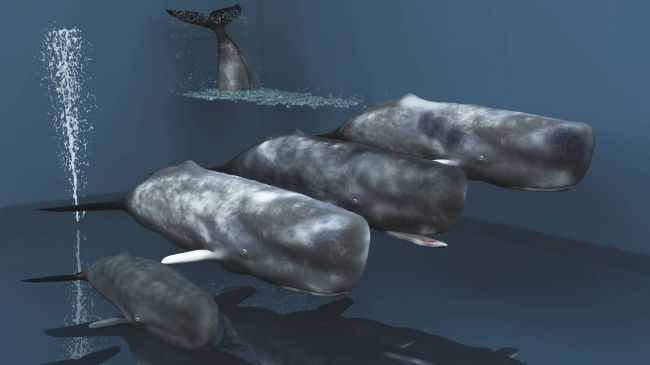 Poseable Sperm Whales For Vue