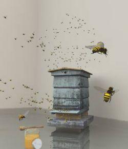 Honey Bee Set For Vue