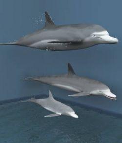 Bottlenose Dolphins For Vue