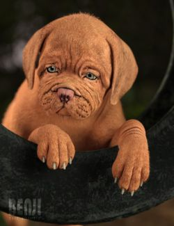 Benji The Puppy HD for Daz Dog 8