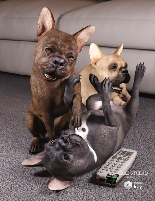 French Bulldog for Daz Dog 8