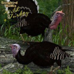 Songbird ReMix Wild Turkey