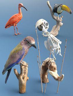4 Bird Props