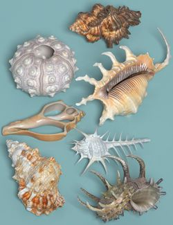 7 Sea Shell Props