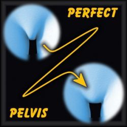 Perfect Pelvis for Dawn