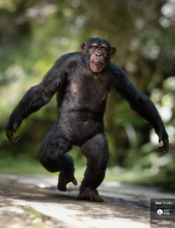 Anthropomorphs - Chimpanzee for Genesis 8 Male
