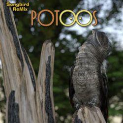 Songbird Remix Potoos