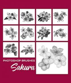 PB - Sakura