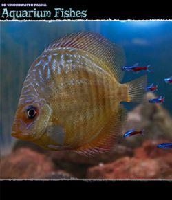 3D Underwater Fauna: African Cichlids