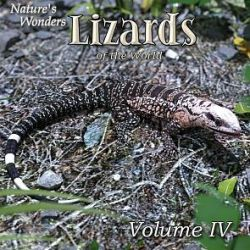 Nature's Wonders Lizards of the World Vol. 4