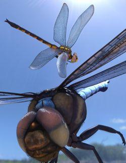 Meshworkz Dragonfly