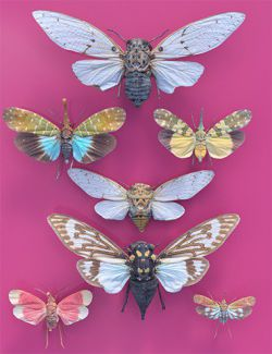7 Cicada Collection Vol 1