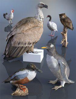 6 Bird Props