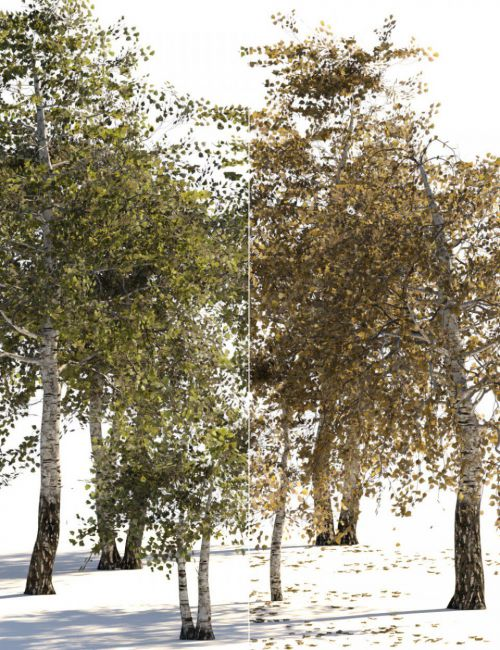 v176 Iray Birch Trees