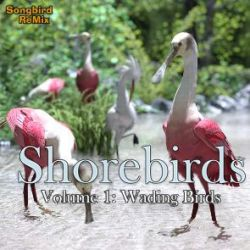 SBRM Shorebirds Vol 1- Wading Birds