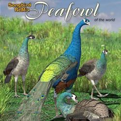 SBRM Peafowl of the World
