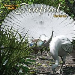 Songbird ReMix Peafowl Variants