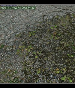 Panoramic Texture Resource: Overgrown Pavement DS IRAY