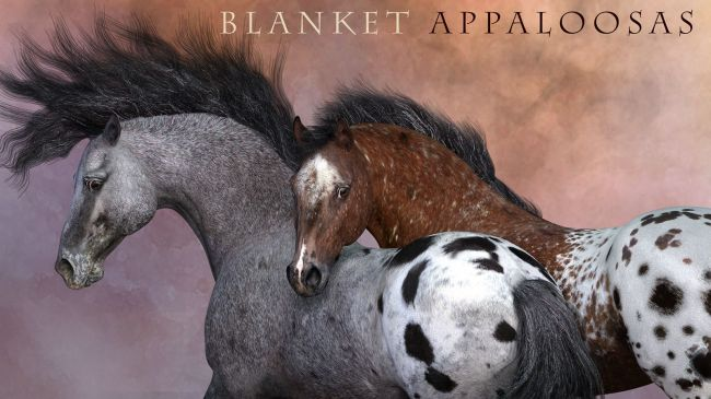 CWRW Blanket Appaloosas for the HiveWire Horse