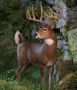 CWRW Whitetail Buck