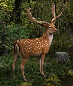CWRW Fallow Deer